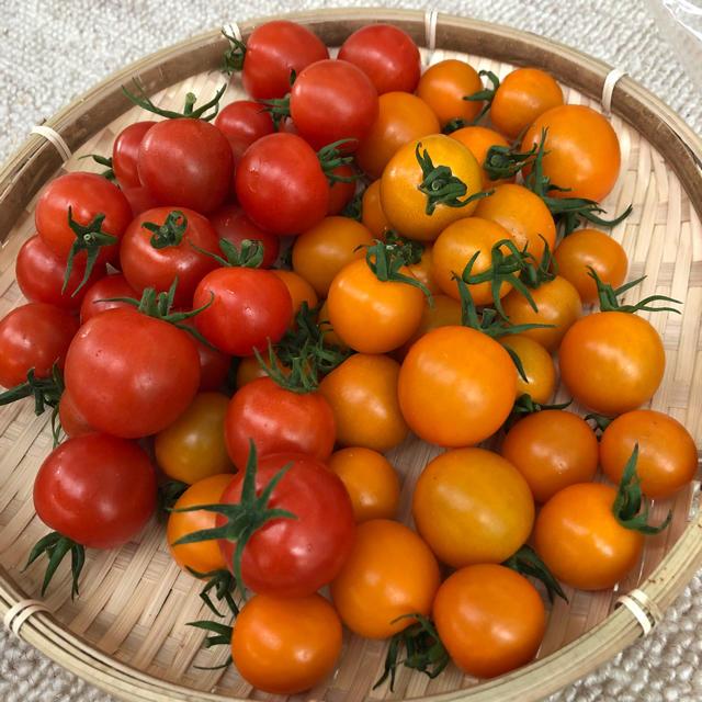 トマト4種セットB 食品/飲料/酒の食品(野菜)の商品写真