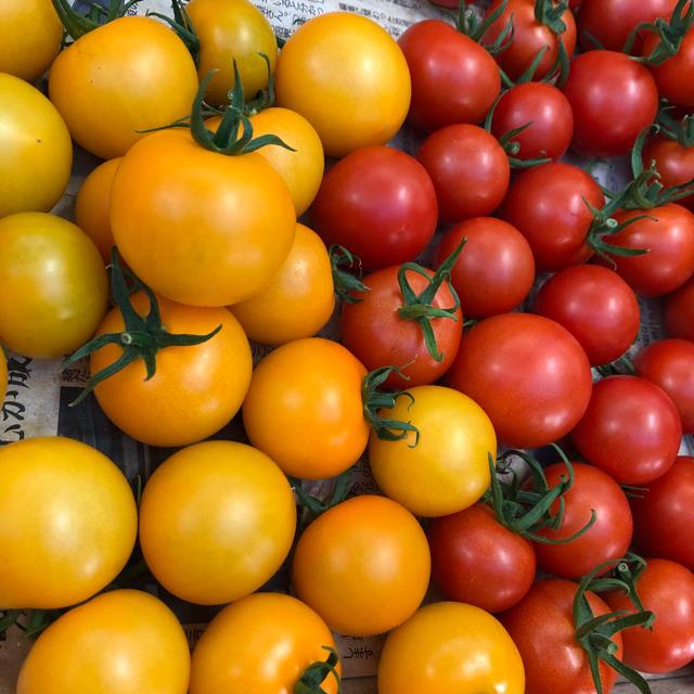 トマト4種セットA 食品/飲料/酒の食品(野菜)の商品写真