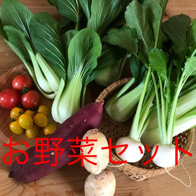 チンゲン菜のお野菜セット 食品/飲料/酒の食品(野菜)の商品写真
