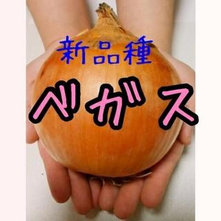 減農薬 北海道産 大きい玉ねぎ 20kg(野菜)