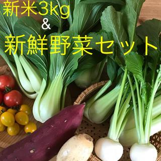 新米3kg&新鮮野菜セット(野菜)
