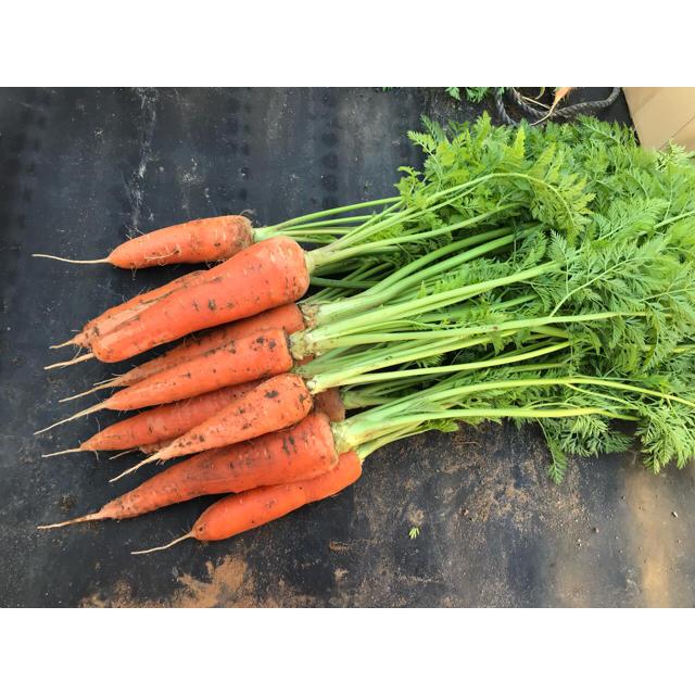 野菜ソムリエサミット 銀賞受賞 柿のように甘い葉付き人参【2キロ】 食品/飲料/酒の食品(野菜)の商品写真