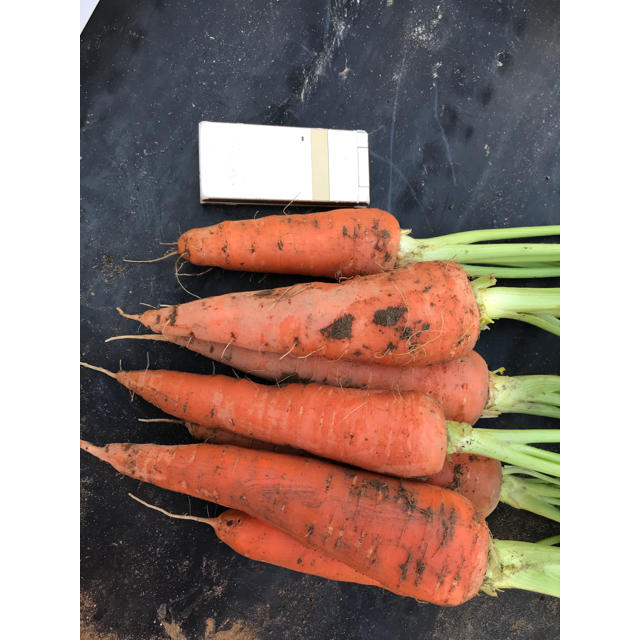 野菜ソムリエサミット 銀賞受賞 葉付き人参【2キロ】 食品/飲料/酒の食品(野菜)の商品写真
