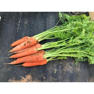 野菜ソムリエサミット 銀賞受賞 葉付き人参【2キロ】(野菜)
