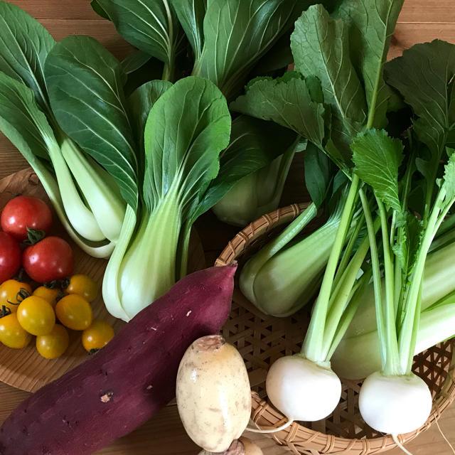 お米5kg&チンゲン菜お野菜セット 食品/飲料/酒の食品(野菜)の商品写真