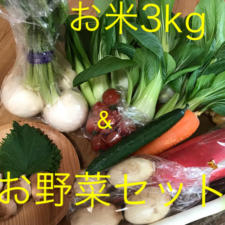 お米3kg&チンゲン菜お野菜セット(野菜)