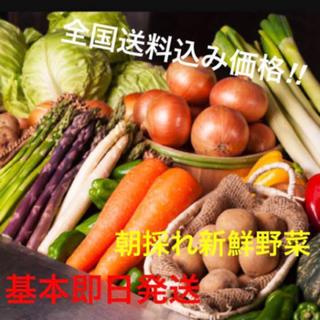 その日の採りたて新鮮野菜をその日に即日発送 大好評‼︎一度お試しください‼︎(野菜)
