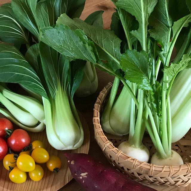 チンゲン菜お野菜セット+おまけ 食品/飲料/酒の食品(野菜)の商品写真