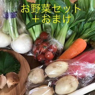 チンゲン菜お野菜セット+おまけ(野菜)
