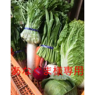 京野菜 詰め合わせ セット 100サイズ 無農薬(野菜)