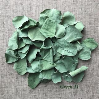 51番◉丸葉が可愛いポポラス・ユーカリの葉セット☆送料無料(ドライフラワー)