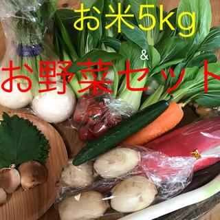 新米5kg&チンゲン菜お野菜セット(野菜)