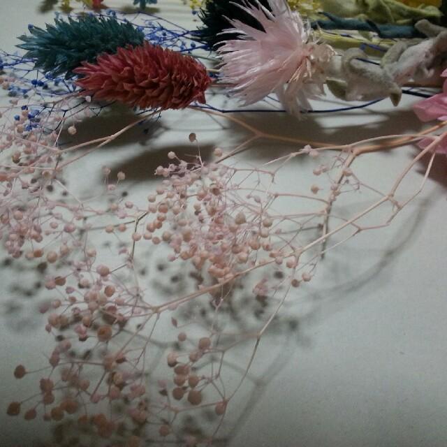 34   プリザーブド ドライフラワー ハーバリウム花材 ハンドメイドのフラワー/ガーデン(プリザーブドフラワー)の商品写真