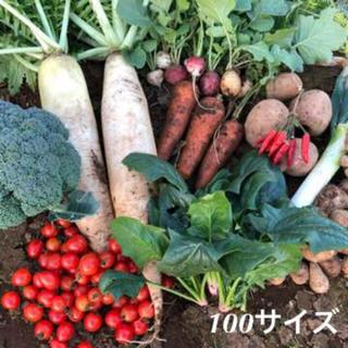 野菜詰め合わせ 野菜セット 新鮮 LL 100サイズ(野菜)
