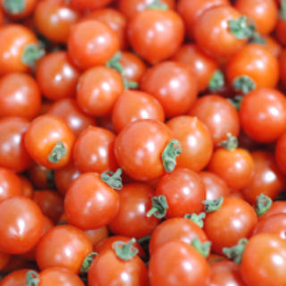 トマト まとめ売り(野菜)