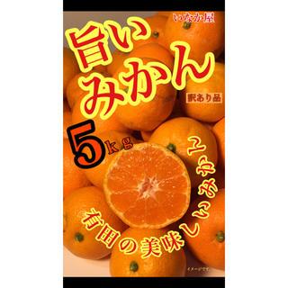 有田みかん 5kg 訳あり品(フルーツ)
