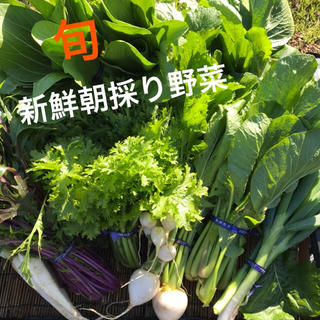 12月26日収穫発送!新鮮野菜詰め合わせ!(野菜)