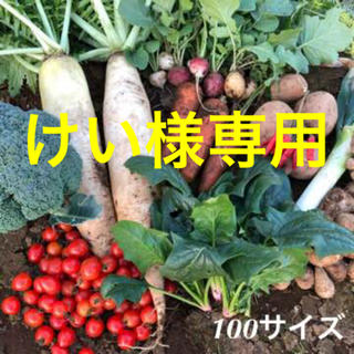 【けい様専用】野菜セット LLサイズ(野菜)