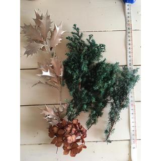 ハーバリウム花材 クリスマス(ドライフラワー)