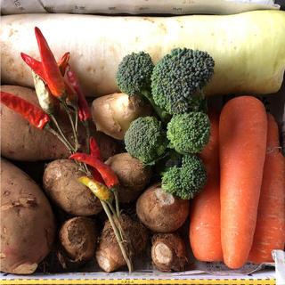 野菜セット 野菜詰め合わせ ミニ(野菜)