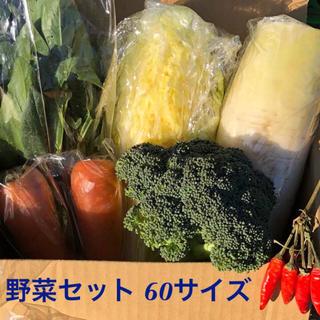 新鮮!野菜詰め合わせ 60サイズ セット(野菜)
