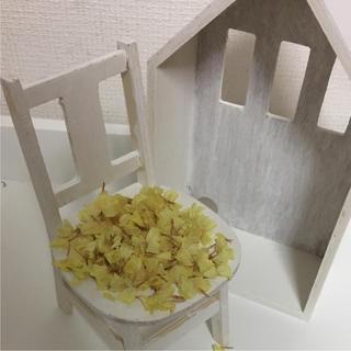 41 ドライフラワー 花材 スターチス  黄色 イエロー(ドライフラワー)