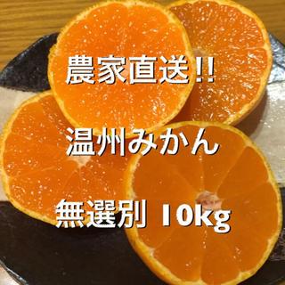 農家直送‼︎ 温州みかん 10キロ 無選別(フルーツ)