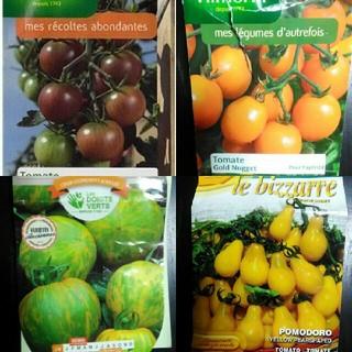 来年1~2月蒔き イタリア野菜の種子など。カラフルなトマトの種 4種類10粒ずつ(野菜)