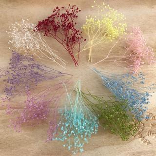 かすみ草の幸せセット♡ハーバリウムなどに(9色)(プリザーブドフラワー)
