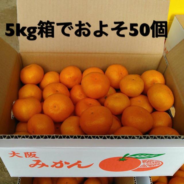 農家直送!! 温州みかん 無選別 5キロ 食品/飲料/酒の食品(フルーツ)の商品写真