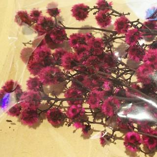 花材 スターリンジャー ストロベリー(プリザーブドフラワー)
