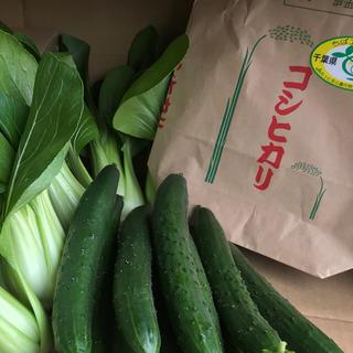 お米3kg&チンゲン菜&キュウリ(野菜)