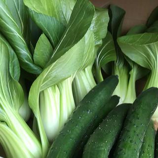チンゲン菜&キュウリ(野菜)