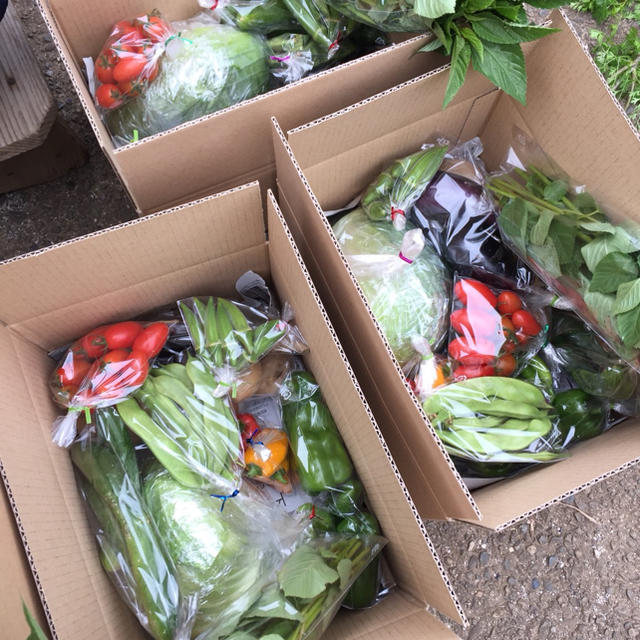 農薬・肥料不使用野菜セットS フリル特別版 食品/飲料/酒の食品(野菜)の商品写真