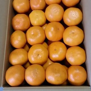 ラスト1箱 蒲郡みかん 2L~3L以上 9kg 送料無料 早生 みかん(フルーツ)