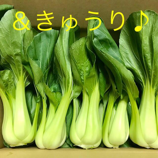 チンゲン菜&キュウリ 食品/飲料/酒の食品(野菜)の商品写真