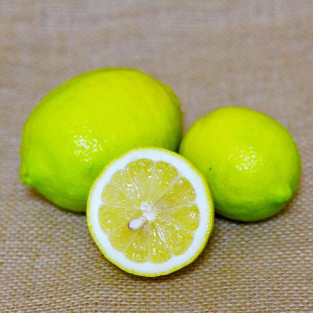 希少!純国産レモン 2kg 食品/飲料/酒の食品(フルーツ)の商品写真