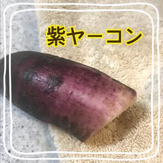 まさ様専用     紫ヤーコン2キロ(野菜)