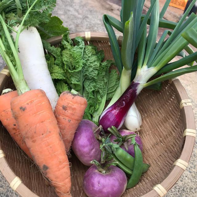 渥美半島より直送!旬彩野菜バスケット【S】 食品/飲料/酒の食品(野菜)の商品写真