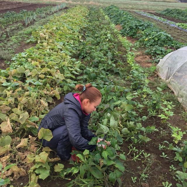 農薬・肥料不使用野菜セットS「4〜3品」フリル特別版 食品/飲料/酒の食品(野菜)の商品写真