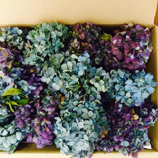 青紫系のとっても綺麗な紫陽花のヘッドがいっぱい(ドライフラワー)