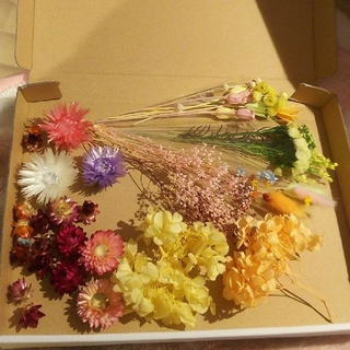花材 春色アソート B5サイズ ハーバリウム、アロマキャンドル、レジンなど(プリザーブドフラワー)