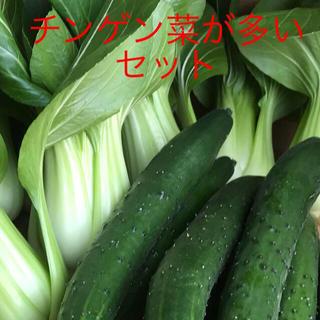 チンゲン菜とキュウリ(野菜)