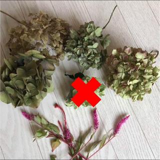 限定3箱☆ 紫陽花4種☆+  おまけのケイトウ4本付き♡  残り2箱‼️(ドライフラワー)