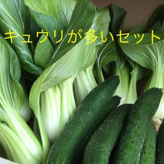 キュウリとチンゲン菜(野菜)