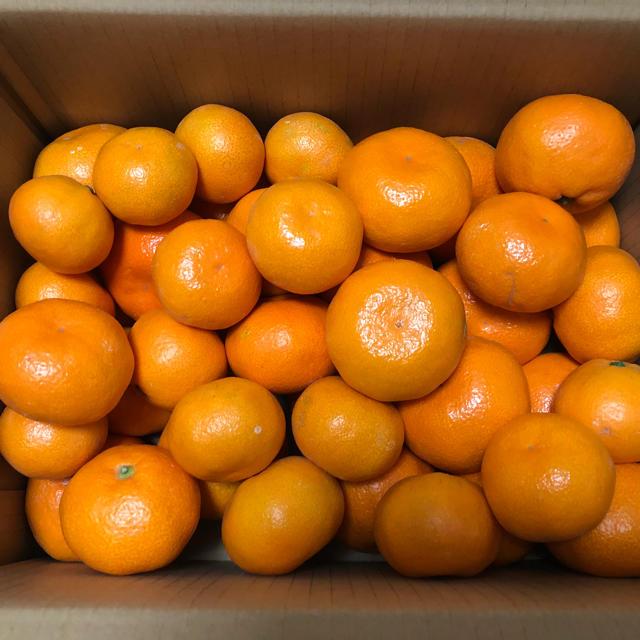 食べたら止まらない!温州みかん 5kg 食品/飲料/酒の食品(フルーツ)の商品写真