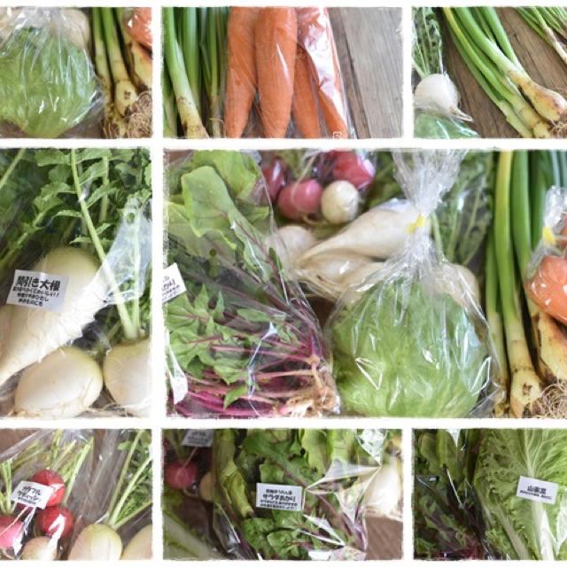 旬のおまかせ野菜8種類セット 食品/飲料/酒の食品(野菜)の商品写真