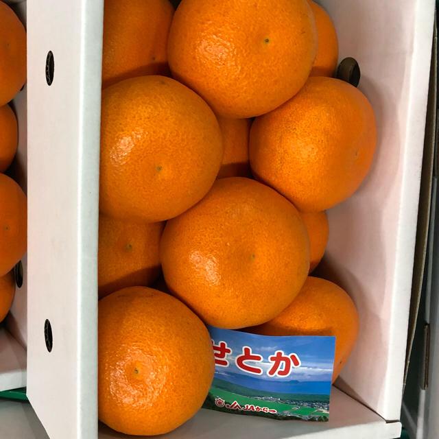 せとか 12入 化粧箱付 最高品質 食品/飲料/酒の食品(フルーツ)の商品写真