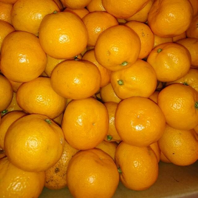 みかん🍊小粒15㎏ 食品/飲料/酒の食品(フルーツ)の商品写真