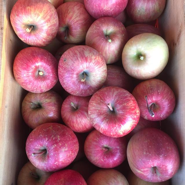 ラスト2箱!感謝価格!青森県産りんご 葉とらずふじ5㌔以上! 食品/飲料/酒の食品(フルーツ)の商品写真